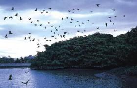 Birds Paradise Park Xinhui
