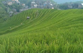 green rice terraces longsheng2