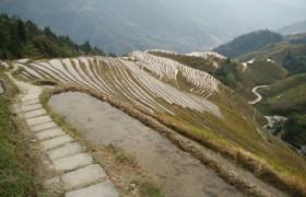 road in paddies
