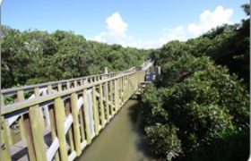 Hong Kong Wetland Park Mangrove Boardwalk