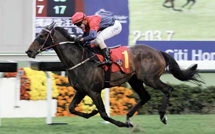 Hong Kong Horse Race Tour for Special Holidays