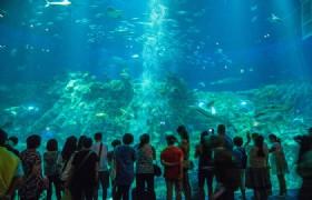 Hong Kong Ocean Park 01