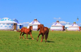 Xilingol 5 Days Mongolian Culture Tour