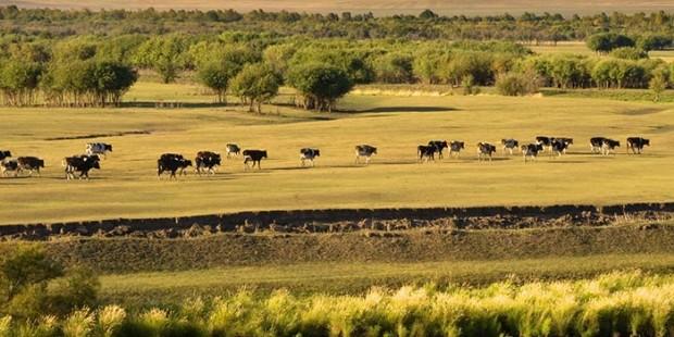 Xilingol Grassland