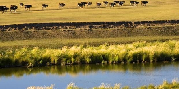 West Wuzhumuqin Grassland