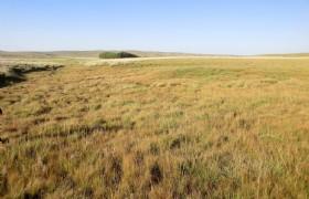 Xilamuren Grassland 1