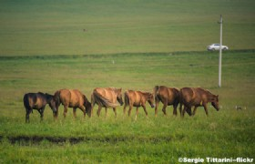Hulunbuir Grasslands2