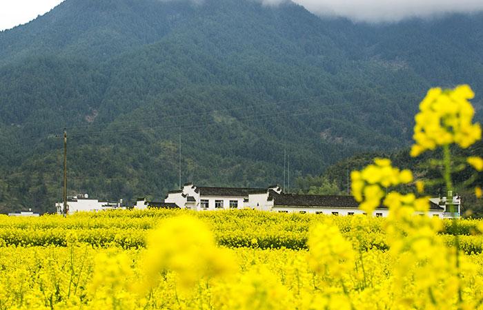Wuyuan Xiaoqi Village