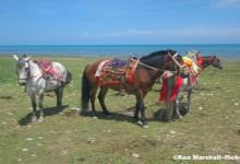 Qinghai Yushu Horse Racing Festival