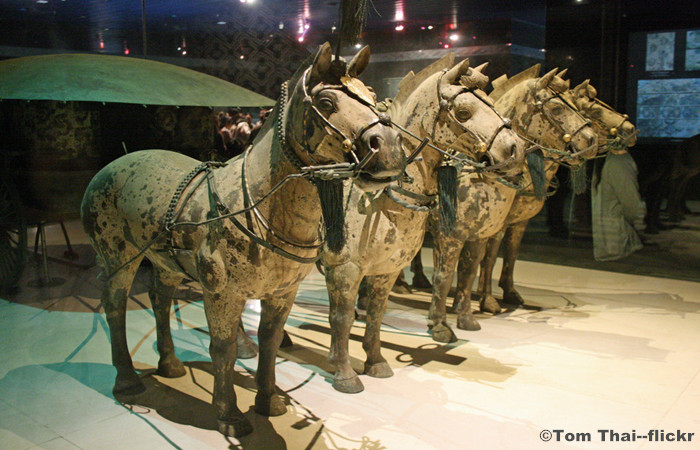 Terracotta Warriors and Forest Park Tour