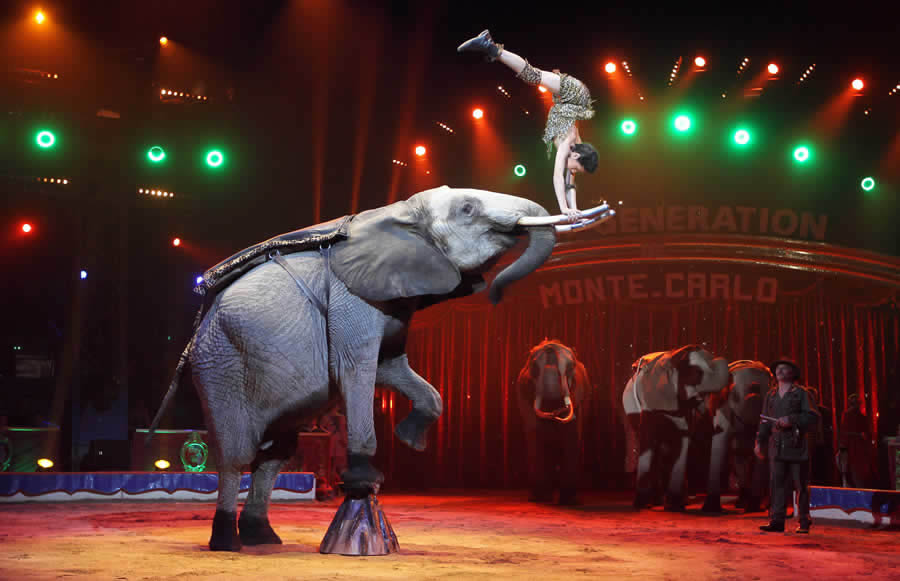 Shanghai Circus World Show