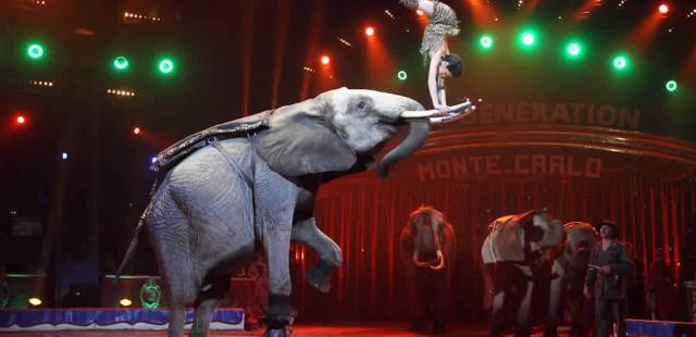 Shanghai Circus World Show