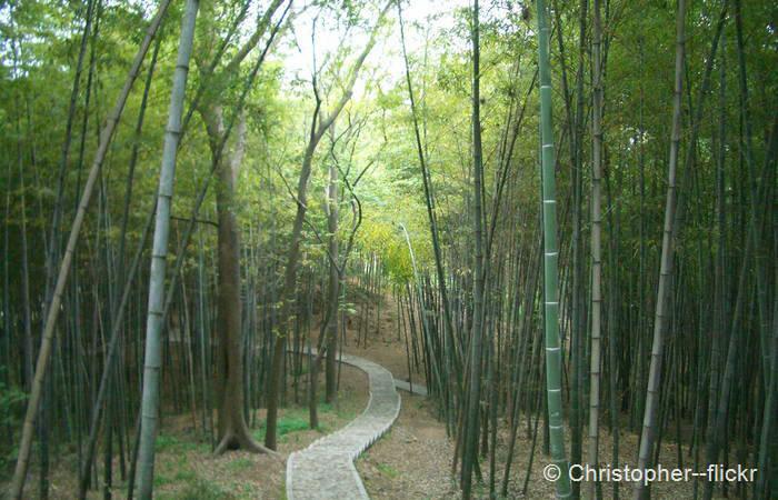 Sheshan Forest Park