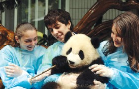 One Day Panda Keeper Volunteer in Dujiangyan