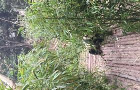 bifengxia panda cleaning