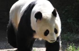 bifengxia panda base 6