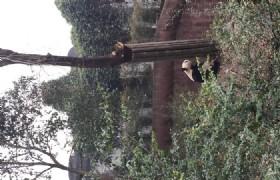 bifengxia panda base cleaning
