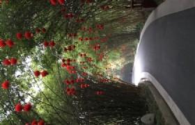 bifengxia panda base bamboo