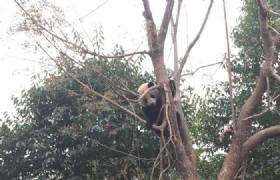 bifengxia panda base guest room