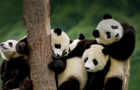 Chengdu & Jiuzhaigou 5 Days Tour