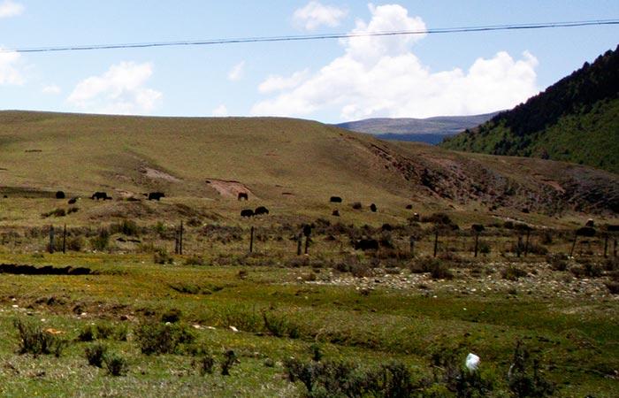 Tagong Grassland