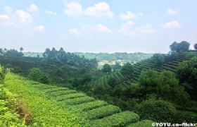 Sichuan Tea Plantation