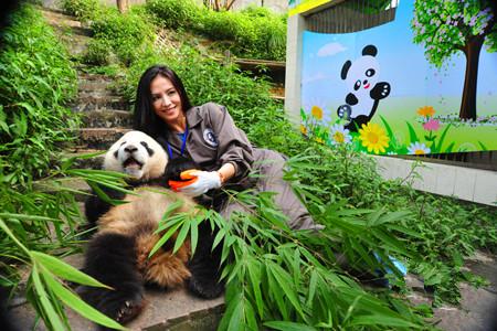 Panda Volunteer One Day Tour at Bifengxia Panda Base