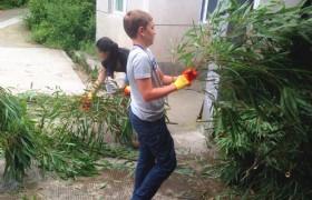 Panda Volunteer at Bifengxia