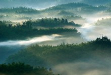 Southern Sichuan Bamboo Sea