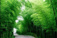 Golden Summit and Bamboo Sea 6 Days Tour