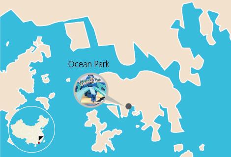 Hong Kong Ocean Park One Day Tour