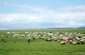 Balikun Grassland_m