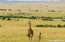 Karamay Wild Animal Protection Area