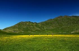 Agonggaiti Grassland