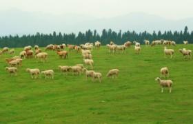 Mount Nan Pasture