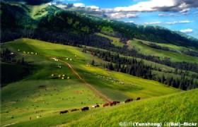 Narat Grassland2