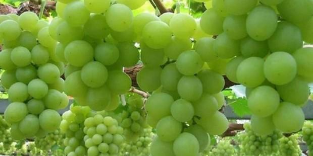 Grape Valley