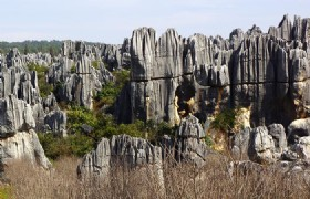 Stone Forest 1