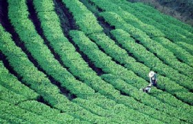 16 Days Southwest Yunnan Ancient Tea & Ethnic Culture Tour