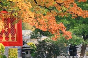 Enjoy Beijing's Golden Autumn