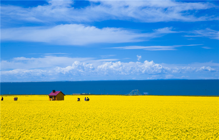 Follow the Footsteps of Spring Across China
