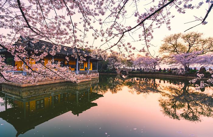 Wuxi Turtle Isle Cherry Blossom