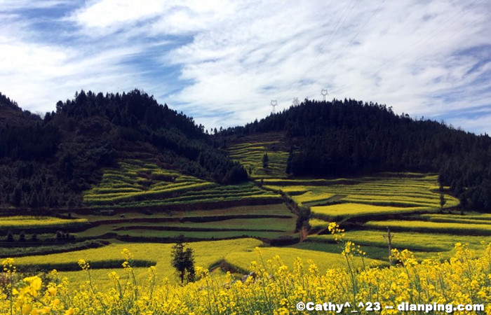 Wander the Golden Fields of Luoping