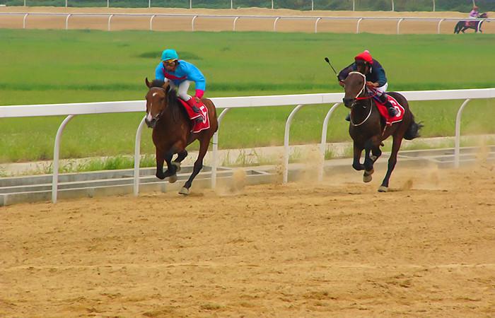 Shangri-La Horse Racing Festival