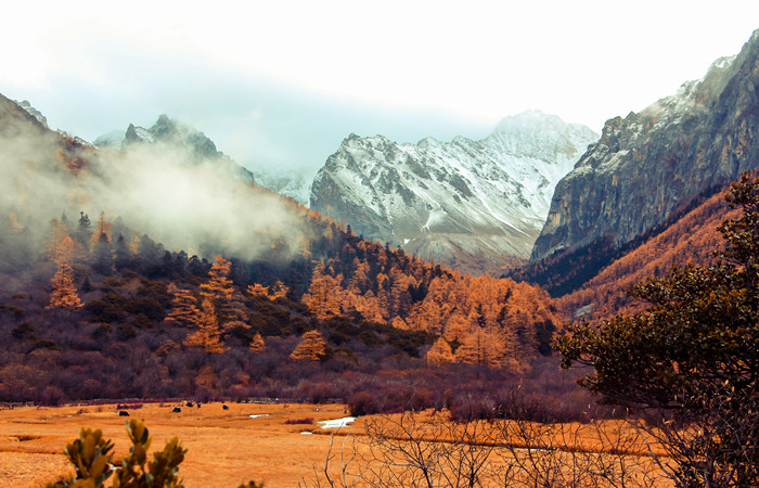 Daocheng and Yading Nature Reserve Top Destination to Check Out