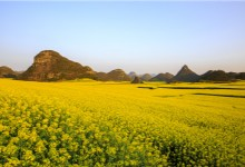 Explore the Wonders of Spring in China