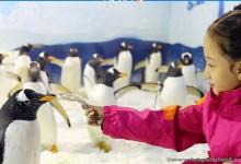 Place of Joy - Harbin Polarland