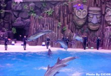 Thrilling but Adorable Experience at Zhuhai Chimelong Ocean Kingdom