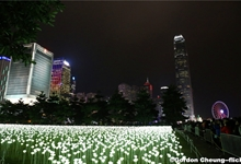 Hong Kong Light Rose Garden