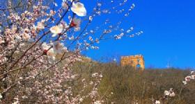 2017 Jinshanling Apricot Flower Festival
